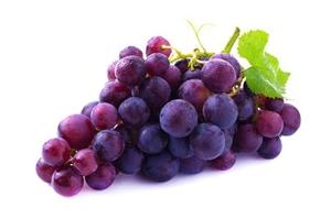 三个月博美可以吃葡萄吗