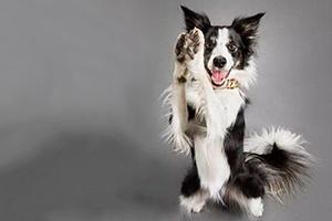 盘点狗狗聪明的6大表现,别被你家狗子骗了!