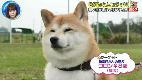 如果在狗狗面前遭人绑架,它会做出怎样的反应?