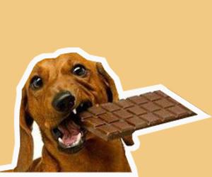 盘点狗狗不能吃的十种食物