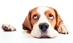 盘点狗狗压力的四个来源