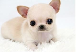 盘点吃得少的小型犬,能够省下不少钱