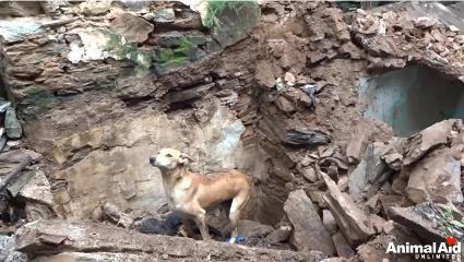 狗妈妈废墟中刨土救子:狗狗到底能有多懂爱?