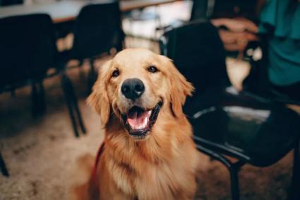 愿你活的像狗子一样真实,像狗,也没什么不好