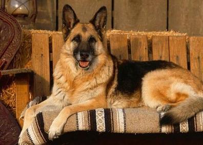 主人离婚后,4年后女主人与狗狗收容所偶遇,狗狗哭得像孩子一样