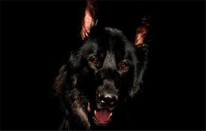 刚出生的狗狗身上会带狂犬病吗