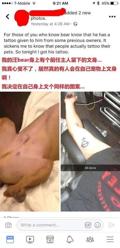 网友在狗子身上发现前任主人留下的纹身,为了表示同情,自己也纹了个相同图案,万万没想到…