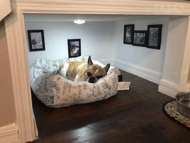 小伙为在楼梯建了一个狗狗小屋,太有爱心了