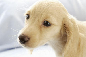 狗宝宝打喷嚏流鼻涕是怎么了
