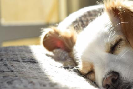 狗狗可以和主人在一起睡觉吗
